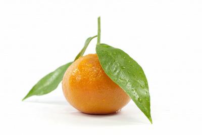 forme HE mandarinier