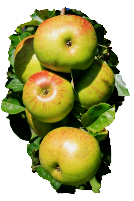 steriliser-pommes
