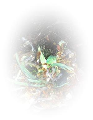 Bac-a-compost