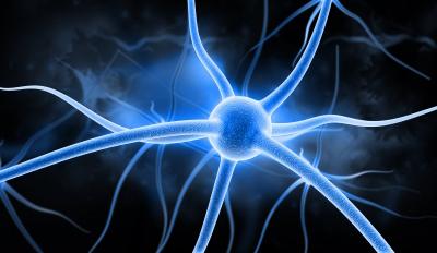 cerveau-neurone3